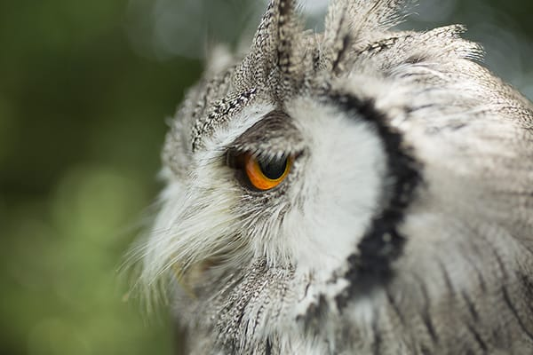 Falconry photography